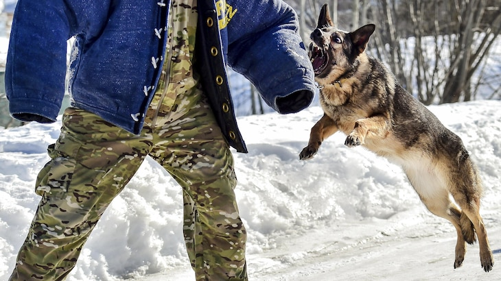 Darla, a German shepherd assigned to the Army's 549th Military Working Dog Detachment, conducts aggression training with a handler at Joint Base Elmendorf-Richardson, Alaska, March 21, 2017. Air Force photo by Justin Connaher