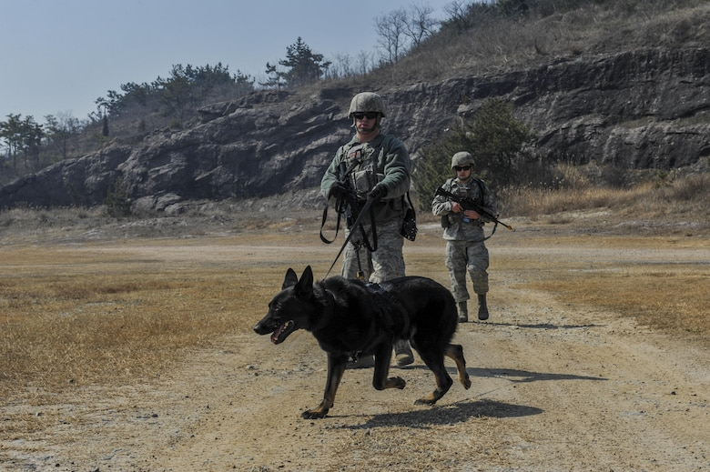 U.S. Air Force Staff Sgt. Todd Richey, 8th Security Forces Squadron military working dog handler, guides his K-9 to specific areas to detect simulated bombs during a field training exercise at Kunsan Air Base, Republic of Korea, March 17, 2017. Military working dogs participate in this training by leading security forces members through areas that have been cleared of explosives.  (U.S. Air Force photo by Senior Airman Colville McFee/Released)