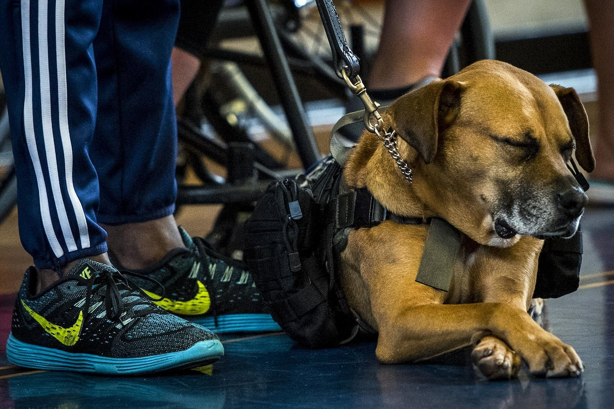 A wounded warrior's service dog takes a short nap.