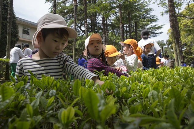 Local Japanese children pick green tea leaves during a Cultural Adaption Program tea harvesting event in Iwakuni City, May 2, 2017. The Cultural Adaptation Program gave Marine Corps Air Station Iwakuni residents the opportunity to experience the Japanese culture alongside elementary and high school students, nursing home residents and other Japanese locals. (U.S. Marine Corps photo by Lance Cpl. Carlos Jimenez)