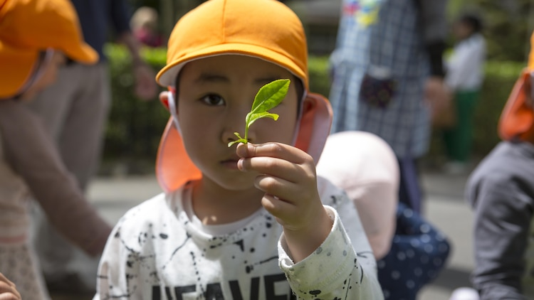 A local Japanese child shows a green tea leaf he picked during a Cultural Adaption Program tea harvesting event in Iwakuni City, May 2, 2017. The Cultural Adaptation Program gave Marine Corps Air Station Iwakuni residents the opportunity to experience the Japanese culture alongside elementary and high school students, nursing home residents and other Japanese locals. (U.S. Marine Corps photo by Lance Cpl. Carlos Jimenez)