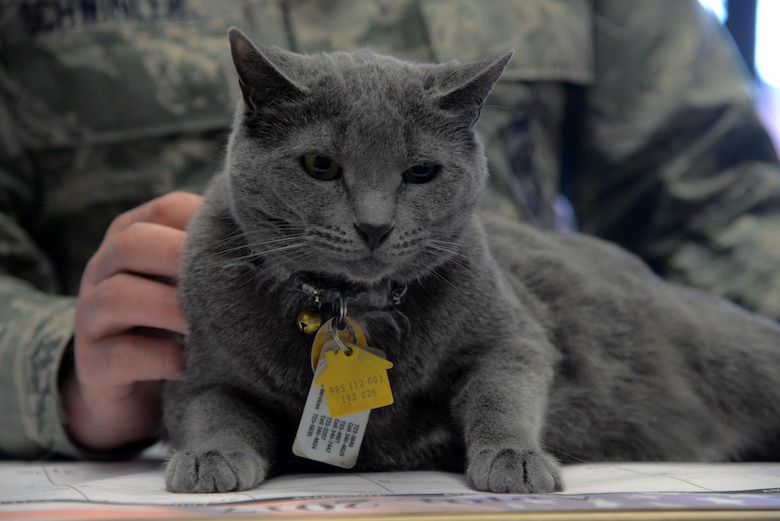 Lt. Col. Randy Schwinler, the 5th Aircraft Maintenance Squadron commander, holds 1st Lt. Buffe Stratofortress Grey, the 5th AMXS mascot, at Minot Air Force Base, N.D., May 3, 2017. Buffe was found at a privately owned animal rescue shelter in Minot N.D., which several 5th AMXS Airmen volunteered on Oct. 14, 2014. (U.S. Air Force photo/Senior Airman Sahara Fales)