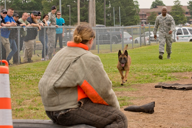 """Freaki, a U.S. Air Force military working dog (MWD), maintains a lock on Senior Airman Ashley Evans, a 19th Security Forces Squadron patrolman, during the """"Military Working Dog (MWD) Competition"""" at Little Rock Air Force Base, Ark., May 17, 2017. The competition, which included area law enforcement agencies, was held in honor of National Police Week, and was designed to conduct tactical obedience with multiple distractors to ensure the MWD would maintain keen focus on the decoy suspect sitting on the tire. The dogs had to bypass several bite sleeves and suits on the ground to reach the decoy. Freaki's handler was Senior Airman Ndidi Akalanze, who is assigned to the 19th SFS. (U.S. Air Force photo by Master Sgt. Jeff Walston/Released)"""