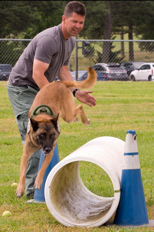 """Police Officer Bruce Moyster, of the North Little Rock Police Department, tries to convince K9 Zeus, an 8-year-old Belgian Malinois, to go through a tube during the """"Military Working Dog (MWD) Competition"""" at Little Rock Air Force Base, Ark., May 17, 2017. Zeus, a dual purpose K9, narcotics detector and patrol, has no experience going through culverts or tubes and found it easier just to go over it. (U.S. Air Force photo by Master Sgt. Jeff Walston/Released)"""