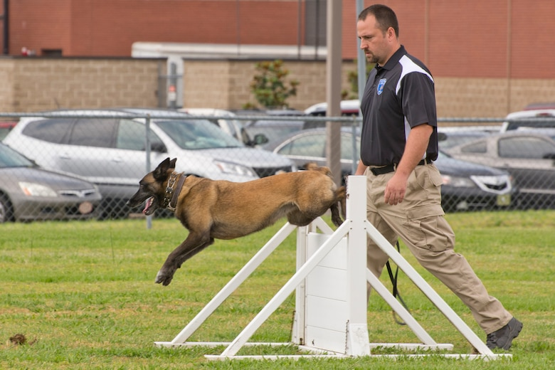 """Corporal Brandon Jones, Hot Springs Police Department, watches as Keena clears a hurdle during the obedience portion of the """"Military Working Dog (MWD) Competition"""" at Little Rock Air Force Base, Ark., May 17, 2017. This portion of the competition is used to simulate an open window or a barrier that a MWD might have to maneuver to get to a subject. The competition was held in honor of National Police Week. (U.S. Air Force photo by Master Sgt. Jeff Walston/Released)"""