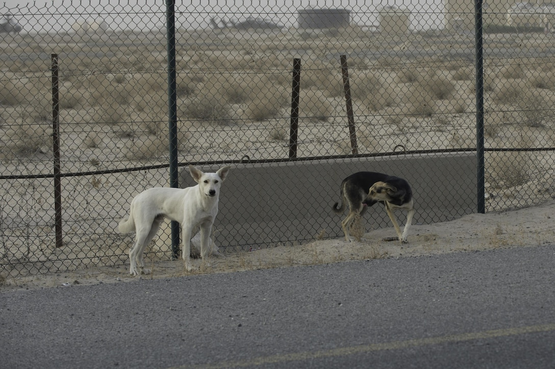 Feral dogs can be prone to fighting amongst themselves and are very protective of their young, which leaves the base populace at risk of being bitten.