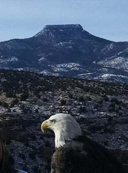 ABIQUIU LAKE, N.M. – One of the bald eagles spotted during the annual Midwinter Eagle Watch, Jan. 7, 2017. Cerro Pedernal is seen in the background. Photo by Clarence Maestas. This 2017 Photo Drive entry placed first based on employee voting.