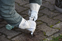 A U.S. Airman assigned to the 86th Comptroller Squadron uses a tool to remove weeds from in between sidewalk tiles on Ramstein Air Base, Nov. 14, 2017. Airman participate in base clean up twice year.