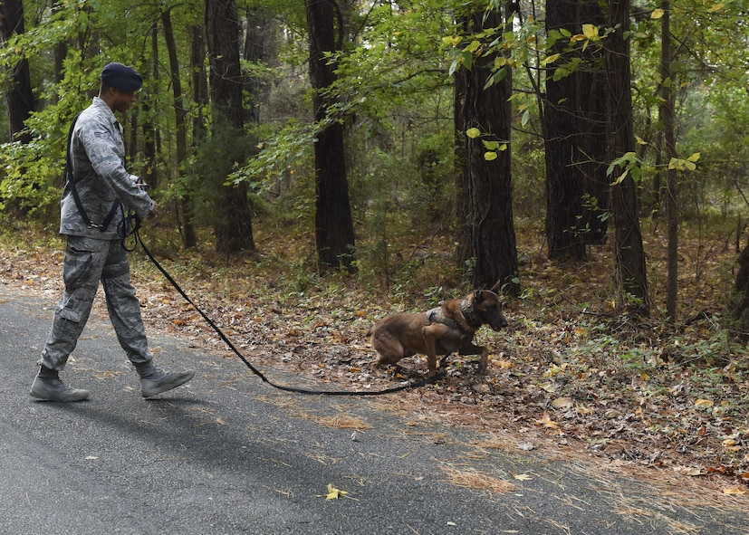 U.S. Air Force Senior Airman Mark Cravens, 633rd Security Forces Squadron military working dog handler, and his dog Mmarc, 633rd SFS MWD, train to detect explosive threats at Joint Base Langley-Eustis, Va., Nov. 14, 2017.