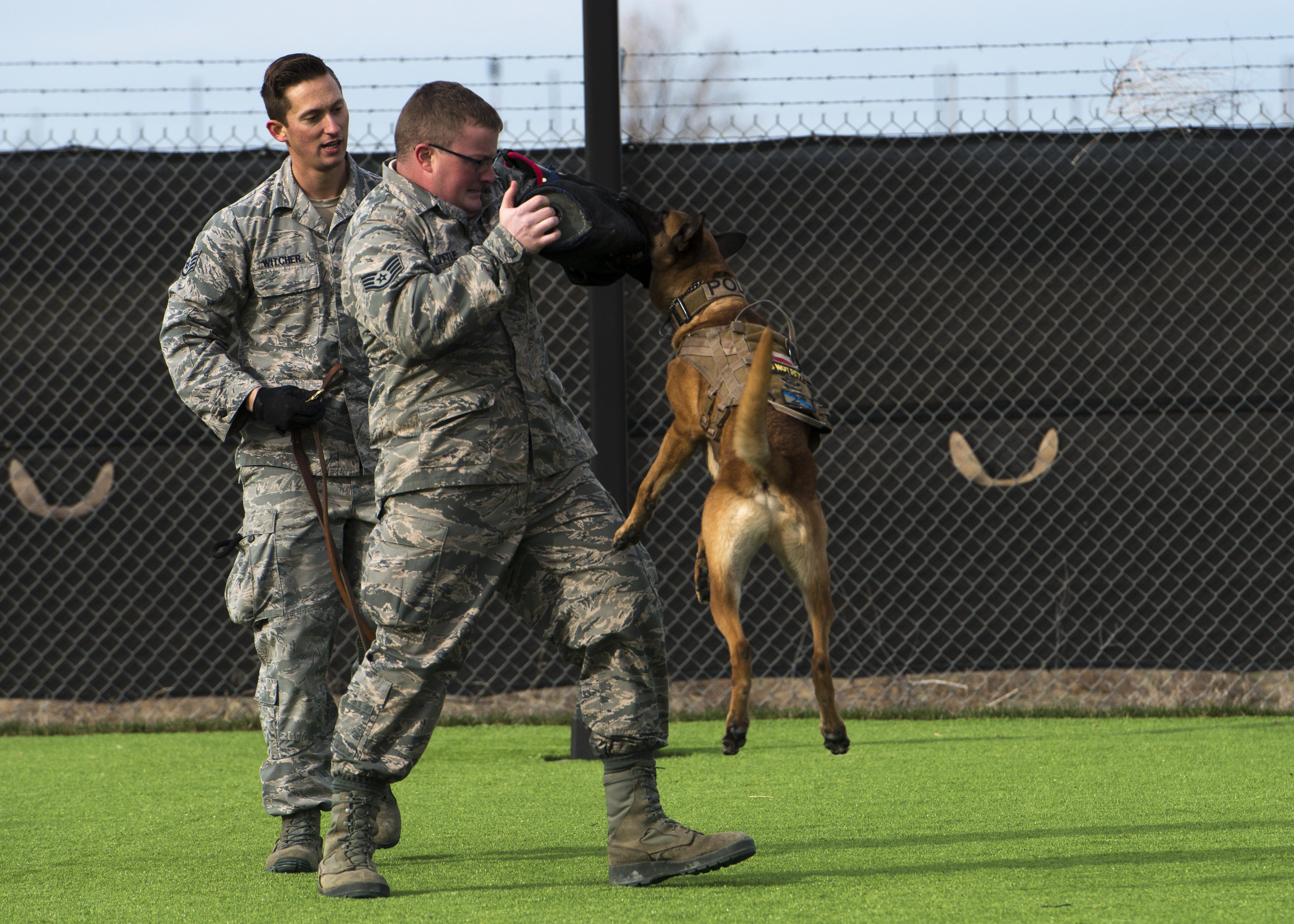 Mountain Home Air Force Base Opens New Military Working Dog