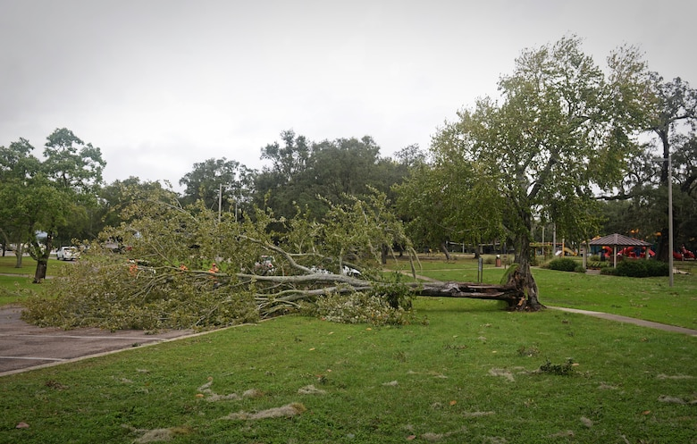 Vectrus contractors work to clear fallen trees and debris on Keesler Air Force Base, Mississippi, Oct. 8, 2017, after Hurricane Nate, a category one hurricane, made landfall just West of the base. There were no injuries to Keesler AFB personnel and the base sustained no major damage or significant flooding. This is the first hurricane to hit the base since Katrina in 2005, which caused devastation along the Gulf Coast. (U.S. Air Force photo by Senior Airman Travis Beihl)
