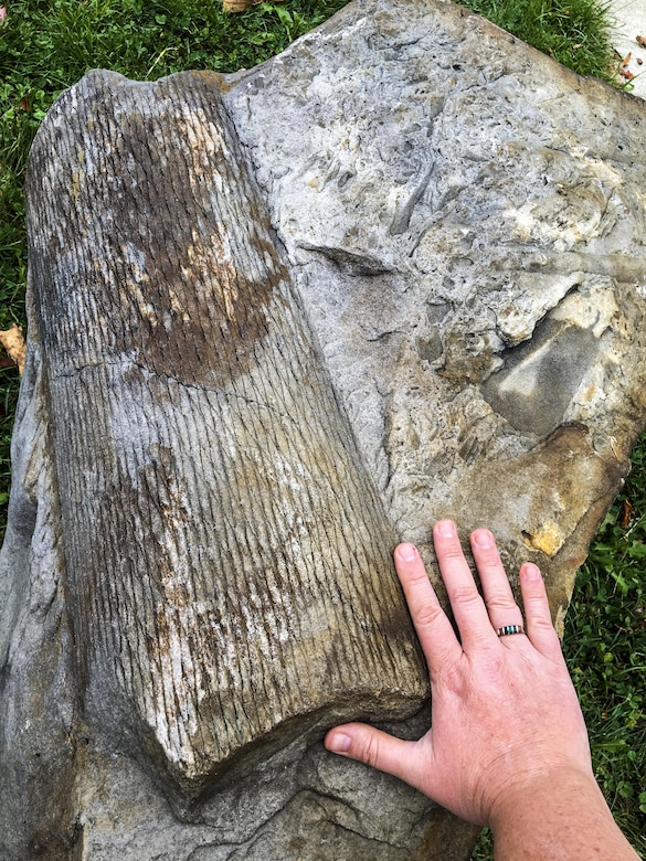 Pittsburgh District's East Branch Lake team extracted a fossil from the lakes shoreline, Oct. 5.