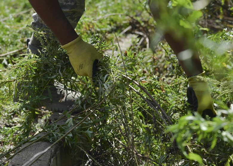 A U.S. Air Force Airman assigned to the Base Appearance Team pulls out overgrown weeds at Joint Base Langley-Eustis, Va., Oct. 2, 2017