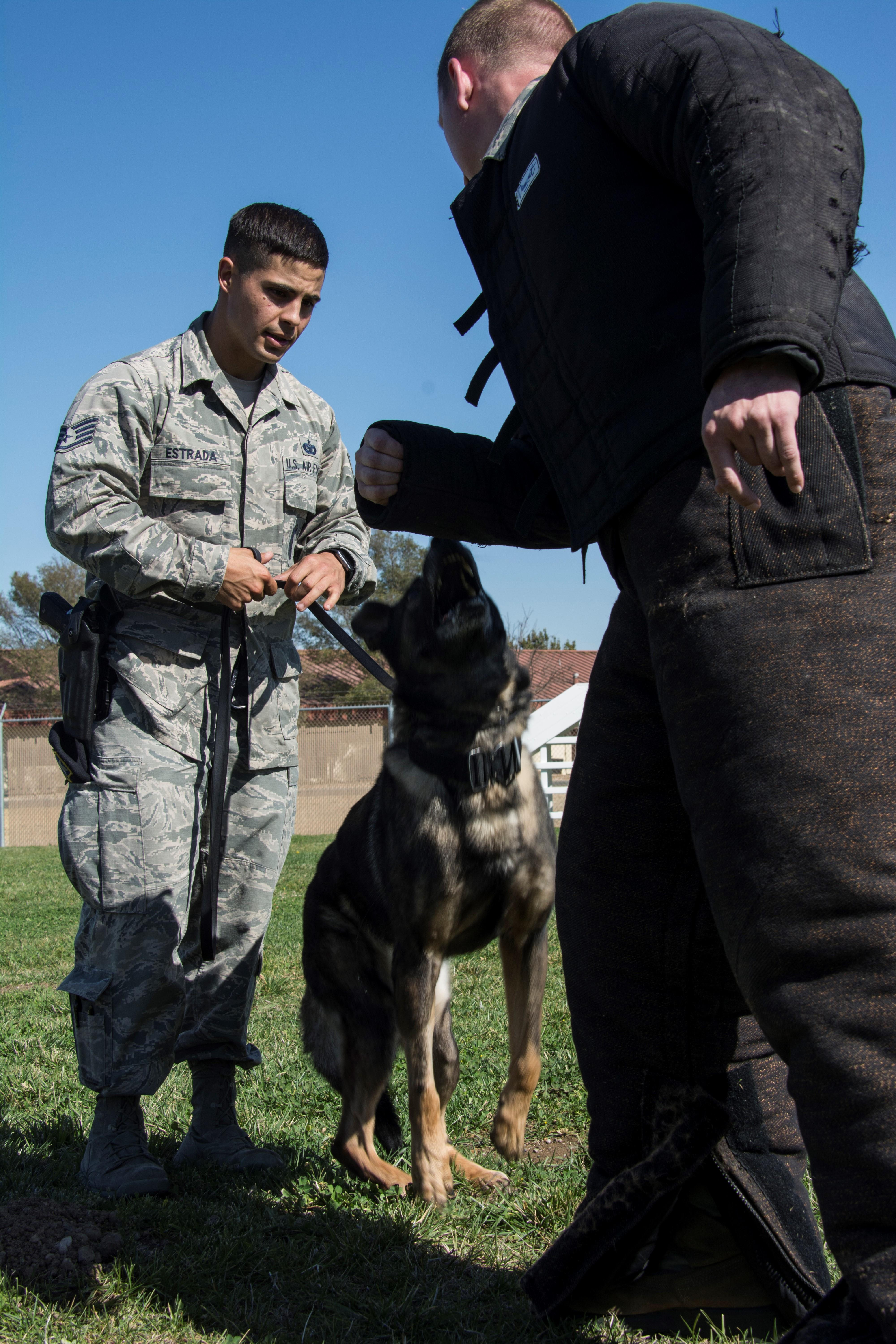 Military Working Dogs Handlers Are Mission Ready Travis Air Force