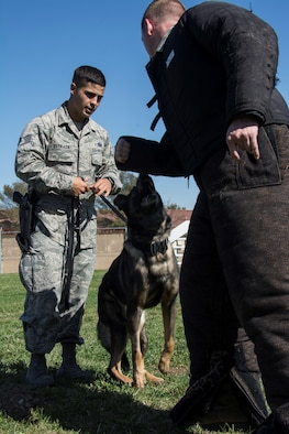 Staff Sgt. Jonathan Estrada, 60th Security Forces Squadron military working dog handler, gave his MWD, Huba, a command to attack an airman Oct. 5 at the 60th SFS dog handler training section at Travis Air Force Base, Calif. Huba is one of many military working dogs which practice daily to stay above the standards on their training. (U.S. Air Force photo by Airman 1st Class, Jonathon D. A. Carnell)