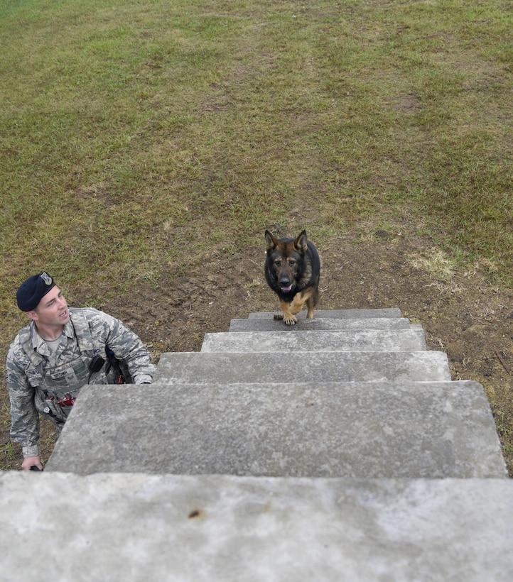 A dog climbs stairs