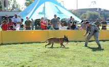 Staff Sgt. Timothy Poissant, 81st Security Forces Squadron military working dog handler, and Zeno, 81st SFS military working dog, perform a demonstration for Keesler families during Operation Hero Oct. 14, 2017, on Keesler Air Force Base, Mississippi. The event was designed to help children better understand what their parents do when they deploy. (U.S. Air Force photo by Kemberly Groue)