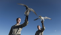 U.S. Air Force Academy Cadets 3rd Class Shawn Weathersby (left) and James Barney, both falconers at the academy falconry program, prepare to release their falcons Oct. 12, 2017, at the U.S. Air Force Academy, Colorado Springs, Colo. Nine cadets make up the academy's falconry team, with four chosen each year to replace the graduating seniors. New cadet falconers begin training in January under upperclassman. Their daily duties include maintaining equipment in the facility, cleaning the mews, feeding the falcons, checking each bird's health and weight and training them.