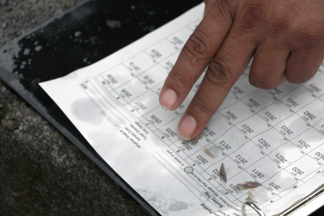 Fin clips are collected and used for DNA analysis during the Muckleshoot and Puyallup Tribes' monitoring of fish returns and hatchery stock collection at the U.S. Army Corps of Engineers trap and haul facility in Buckley, Washington.