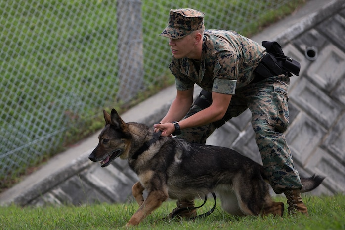 Lance Cpl. Garrett Impola holds his dog back during a K-9 aggression demonstration.
