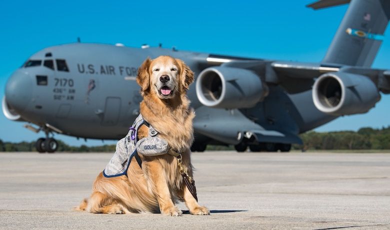 Lt. Col. Goldie poses for a photo on the flight line in front of a C-17 Globemaster III, Oct. 20, 2017, on Dover Air Force Base, Del. Goldie, the only U.S. Air Force therapy dog, is stationed at Walter Reed National Military Medical Center, Bethesda, Md., and took part in the 436th Medical Operations Squadron Family Advocacy Domestic Violence Awareness Month outreach by visiting Team Dover personnel. (U.S. Air Force photo by Roland Balik)