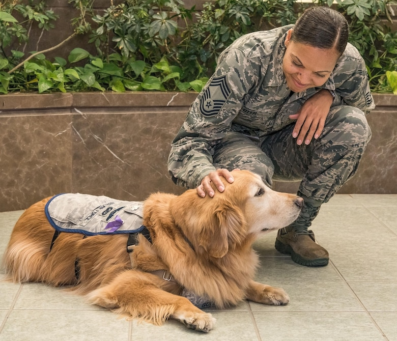Chief Master Sgt. Meshelle Dyer, Air Force Mortuary Affairs Operations chief enlisted manager, pets Lt. Col. Goldie during his visit to AFMAO, Oct. 20, 2017, on Dover Air Force Base, Del. Goldie is a nine-year old Golden Retriever therapy dog stationed at Walter Reed National Military Medical Center, Bethesda, Md. He is the only therapy dog in the U.S. Air Force. (U.S. Air Force photo by Roland Balik)