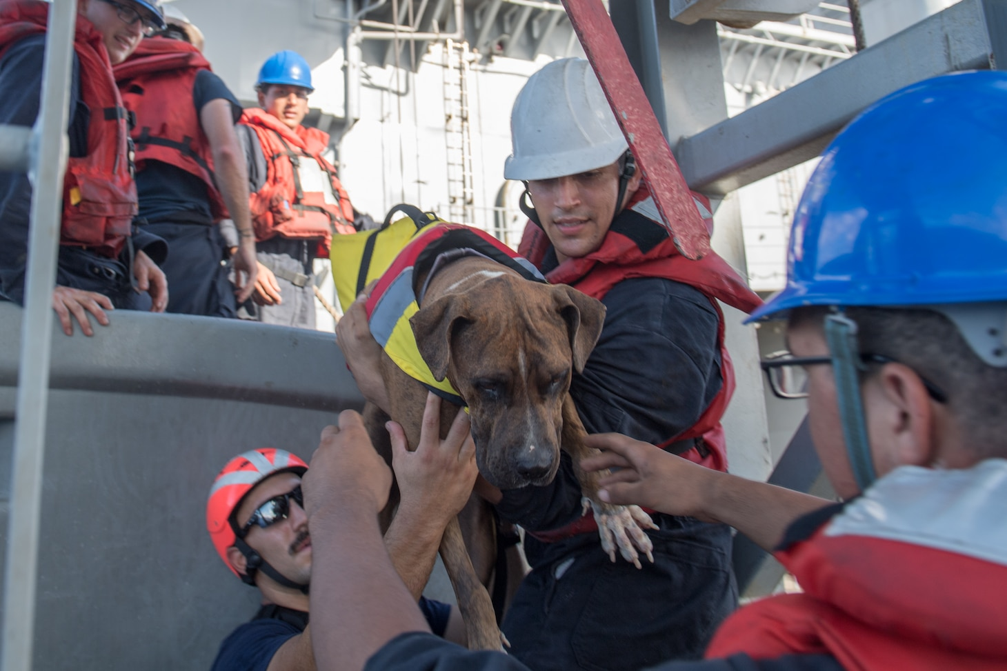 PACIFIC OCEAN (Oct. 25, 2017) Sailors help Zeus, one of twos dogs who were accompanying two mariners who were aided by the amphibious dock landing ship USS Ashland (LSD 48). Ashland, operating in the Indo-Asia-Pacific region on a routine deployment, rescued two American mariners who had been in distress for several months after their sailboat had a motor failure and had strayed well off its original course while traversing the Pacific Ocean.