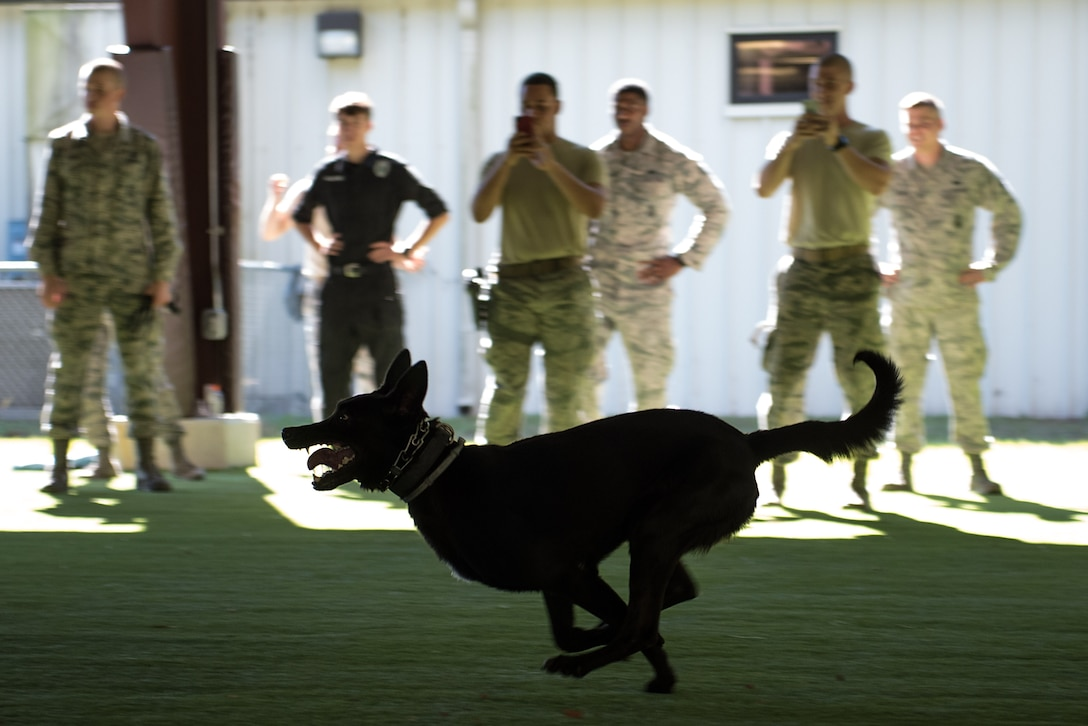 """EEland, 4th Security Forces Squadron military working dog, chases after a simulated suspect in a bite suit during the """"Hardest Hit"""" portion of the East Coast Iron Dog competition, Oct. 25, 2017, at Seymour Johnson Air Force Base, North Carolina. Dogs and their handlers from Camp Lejeune, North Carolina, and the Stantonsburg Police Department competed in the competition. (U.S. Air Force photo by Airman 1st Class Kenneth Boyton)"""