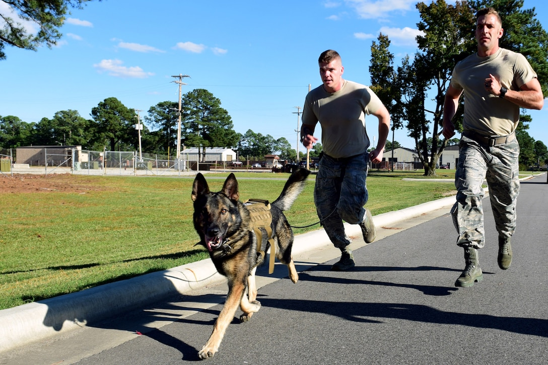 Miko, 4th Security Forces Squadron military working dog, Senior Airman Preston Pearce, 4th SFS MWD handler, center, and Staff Sgt. Austin Craven, 4th SFS MWD trainer, right, embark on a 2-mile run during the last portion of the East Coast Iron Dog competition, Oct. 25, 2017, at Seymour Johnson Air Force Base, North Carolina. The competition consisted of a narcotics and explosive detection contest, high-risk patrol scenario with tactical movements, hardest-hitting dog contest, and ended with a 2-mile endurance run. (U.S. Air Force photo by Airman 1st Class Kenneth Boyton)