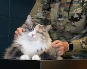 Daisy, a cat belonging to Tech. Sgt. Todd Livingston, an electrical power production technician assigned to the 28th Civil Engineer Squadron, gets a checkup by Army Capt. Casey Barwell, the officer in charge of the Ellsworth Veterinary Clinic, at Ellsworth Air Force Base, S.D., Oct. 27, 2017. The Ellsworth Veterinary Treatment Facility's main priority is to care for Military Working Dogs so they can be ready for deployments, however, they do care for privately owned pets on occasion. (U.S. Air Force Photo by Airman 1st Class Thomas Karol)