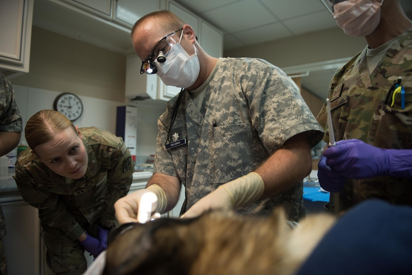 Army Capt. (Dr.) Margot Boucher, left, the 358th Medical Detachment officer in charge of the base veterinary treatment facility, observes Air Force Lt. Col. (Dr.) Brent Waldman, the 386th Expeditionary Medical Operations flight commander and dentist, as he performs a root canal on a military working dog in Southwest Asia, Aug. 30, 2017. Waldman worked with the Army's veterinary clinic to provide the medical treatment to the dog. Air Force photo by Tech. Sgt. Jonathan Hehnly