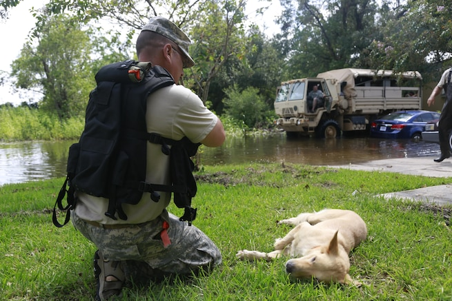 A soldier kneels down near a dog lying in grass.