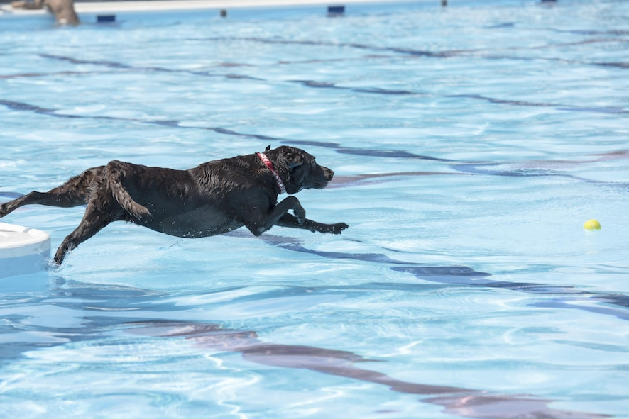 A dog jumps into the pool during the Dog Days of Summer event at Yokota Air Base,Japan, Sept. 9, 2017.
