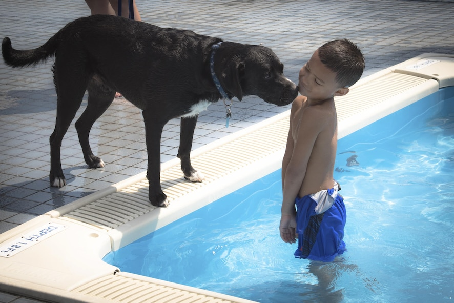 A dog sniffs a child during the Dog Days of Summer event at Yokota Air Base, Japan, Sept. 9, 2017.