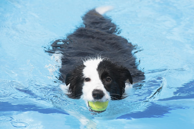A dog plays fetch with owner in the pool during the Dog Days of Summer event at Yokota Air Base, Japan, Sept. 9, 2017.