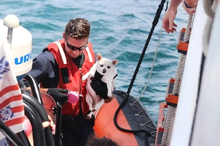 A Coast Guard member brings a dog aboard a cutter.