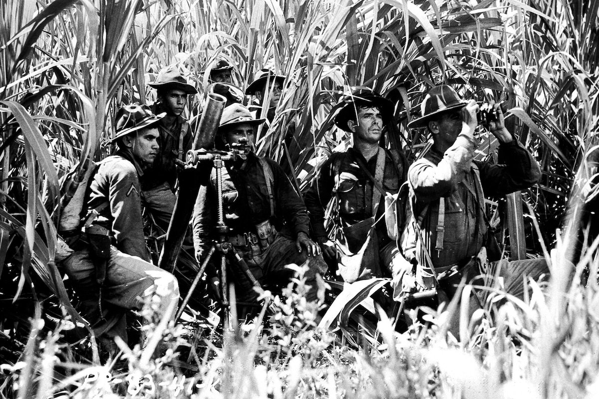 A row of soldiers kneels at the edge of a cane field.