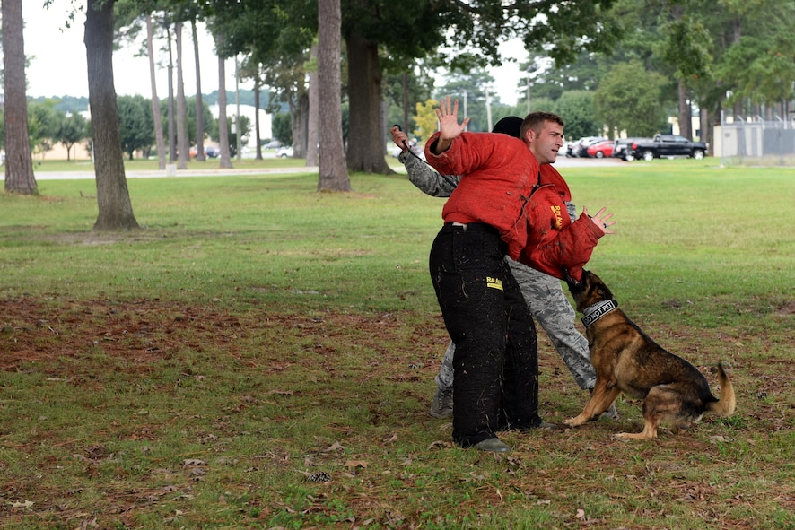 Staff Sgt. Austin Craven, 4th Security Forces Squadron military working dog handler, demonstrates a military working dog seizure during the 4th Fighter Wing 75th Anniversary tour, Sept. 15, 2017, at Seymour Johnson Air Force Base, North Carolina. During the tour, members of the Fire Department, security forces, MWD and explosive ordnance disposal held different stations and demonstrated the supporting units that support the 4th Fighter Wing mission. (U.S. Air Force photo by Airman 1st Class Miranda A. Loera)