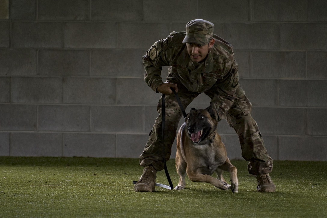 Military Working Dog Norton and Senior Airman Cody Carr, 823rd Base Defense Squadron MWD handler, demonstrate the ability to assist in law enforcement scenarios, Sept. 15, 2017, at Moody Air Force Base, Ga. The demonstration showcased their capabilities to Moody AFB and local-community medical providers. (U.S. Air Force photo by Airman 1st Class Daniel Snider)