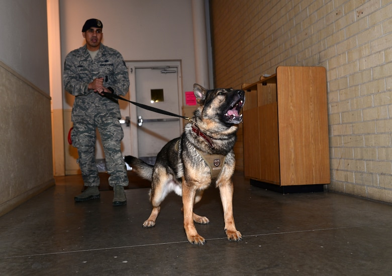 Security Forces members used this opportunity to build relationships with their civilian counterparts and familiarize their K-9s with areas around the city.