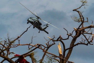 A helicopter flies above a damaged tree.