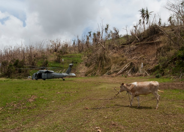 A U.S. Navy helicopter on the ground prepares to transport evacuees off Dominica.