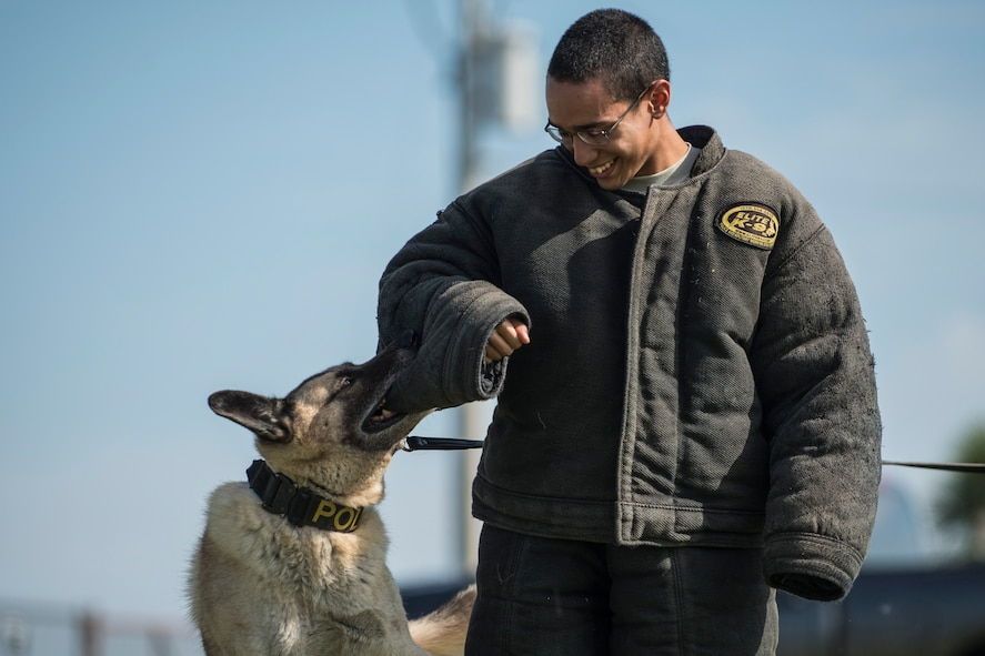 U.S. Air Force Airman 1st Class Jose Torres, a customer service technician assigned to the 6th Force Support Squadron, receives a training bite from military working dog Jecky at MacDill Air Force Base, Fla., Sept. 21, 2017.