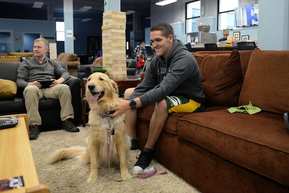 Providing comfort and resiliency one paw at a time