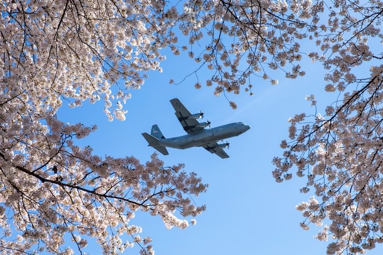 A C-130J Super Hercules assigned to the 36th Airlift Squadron flies over Yokota Air Base, Japan, during a training mission March 30, 2018. Sakura trees bloomed at Yokota eight days earlier than last year. (U.S. Air Force photo by Yasuo Osakabe)
