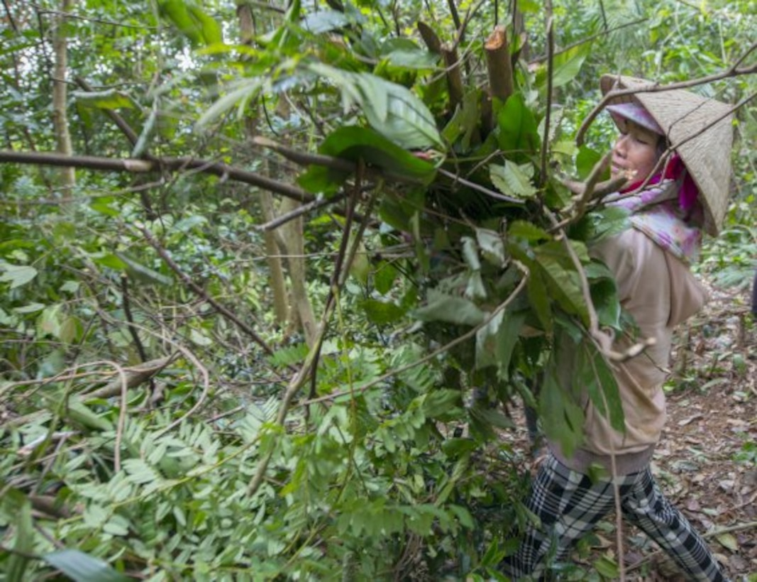 A Vietnamese worker clears jungle vegetation from an excavation site March 17, 2018, in Quang Ngai province, Vietnam, where an American pilot crashed during the Vietnam War. (U.S. Army photo by Sean Kimmons)