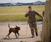 British Army Lance Cpl Brett Brian William France, 1st Military Working Dog Regiment MWD handler, conducts tracker training with a British Army military working dog at RAF Mildenhall, England, March 26, 2018.  The 100th Security Forces Squadron Military Working Dog section trained with the British Army handlers in order to exchange training methods. (U.S. Air Force photo by Senior Airman Luke Milano)