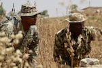 Soldiers in camouflage uniforms move through tall grass,