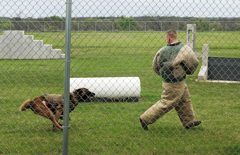 Balto, an 802nd Security Forces Squadron military working dog, chases an 802nd SFS MWD handler, during a demonstration for South San Antonio High School students at Joint Base San Antonio-Lackland, Texas, March 9, 2018. The demonstration was part of a Troops for Teens program event, which links Air Forces Cyber Airmen with SSAHS teens. (U.S. Air Force photo by Tech. Sgt. Jamie Adimora)