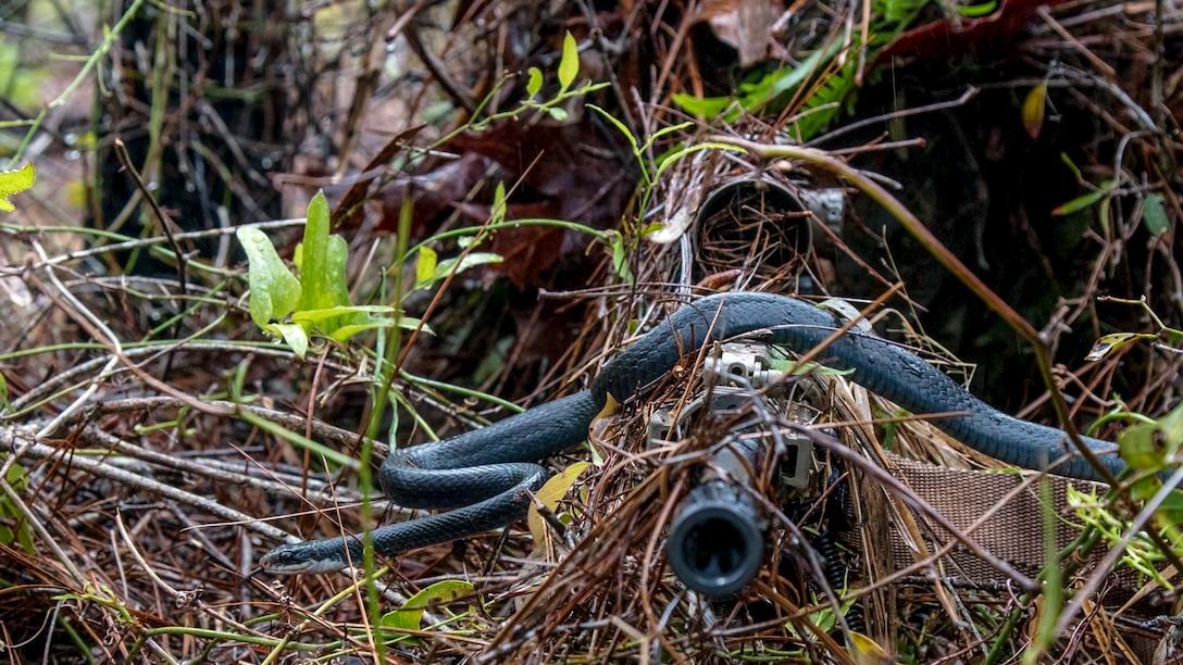 A snake slithers across the barrel of a gun.